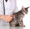 Ветеринарные клиники в Ельцовке